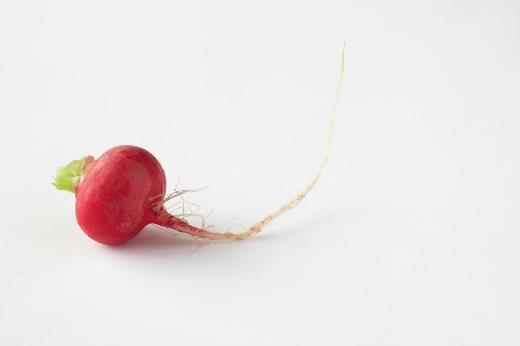 radish by The Culinary Chase