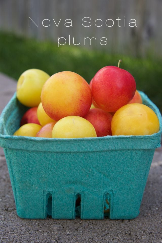 Nova Scotia plums