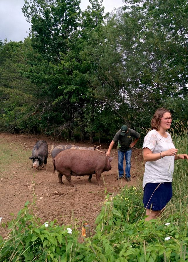 TapRoot pigs